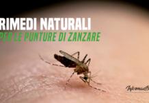 rimedi naturali per le punture di zanzare